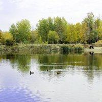 УК озера :: раиса Орловская