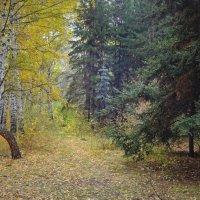 Еле слышно листья сыпятся вниз... :: Елена Ярова
