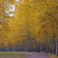 Осенние аллеи. :: Александр Атаулин