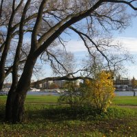 Санкт-Петербург. Елагин остров. :: Лариса (Phinikia) Двойникова