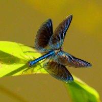 красотка в позе бабочки :: Александр Прокудин