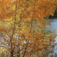 Осень у озера :: Татьяна Ломтева