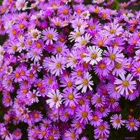 Осенние цветы :: Татьяна Пальчикова