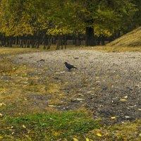 Осенний этюд. :: владимир