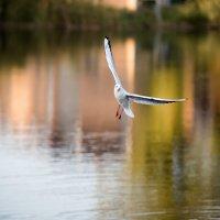 Одинокая чайка :: Денис Красненко