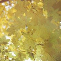 Осенний свет :: Eugeni Lis