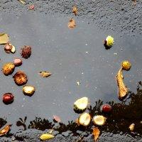 осенний дождь :: ТАТЬЯНА