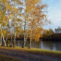 Осень  идёт :: Геннадий Супрун