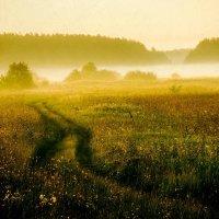 Туманнная тропа :: Aleksey Maron