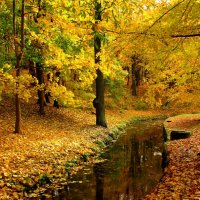 Осенний ручей :: Сергей Карачин