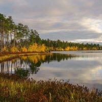 Озеро лесное. :: Анатолий Бахтин