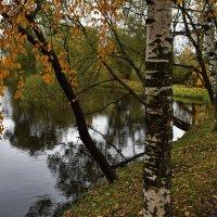 Осень у пруда. :: Татьяна Помогалова