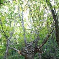 Сказочный лес :: Anton Kovalchuk