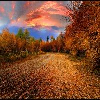 Осенняя дорога. :: Евгений Усатов
