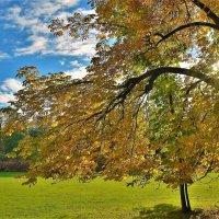 Волшебный свет Золотой осени... :: Sergey Gordoff