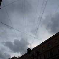 Паутина Питерского неба :: Софья Борисова