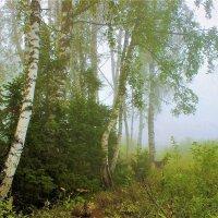 Туман скоро рассеется :: Сергей Чиняев