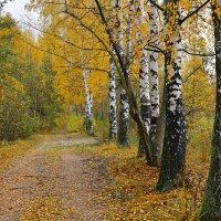 Золотая Осень :: Юрий Бичеров