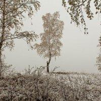 Одиноко в осеннем хороводе... :: Сергей Герасимов