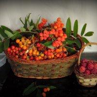 Витамины от рябины и малины. :: nadyasilyuk Вознюк