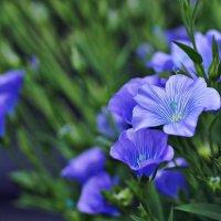 Цветы лета-лен. :: donat