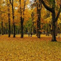 Осень золотая :: Виктор
