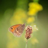 Цвета ушедшего лета......! :: Svetlana Sneg