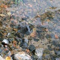 Сайменская вода :: Ольга Васильева