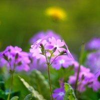 -когда была весна... :: СветланаS ...
