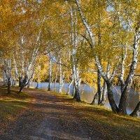 Жёлтый  октябрь :: Геннадий С.