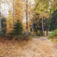 Осень в лесу :: Леонид Никитин