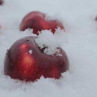 Яблоки на снегу... :: Ксения