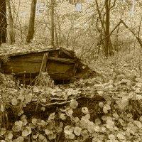 в лесу... :: Андрей Маталин
