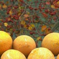 Осенний уличный натюрморт :: Albina