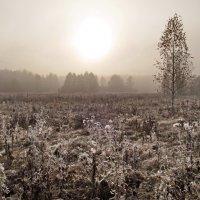 Утро туманное :: Юрий Кузмицкас