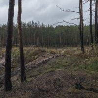 Выгорел кусочек леса :: Яков Реймер