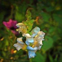 Смешение красок осенних... :: Tatiana Markova