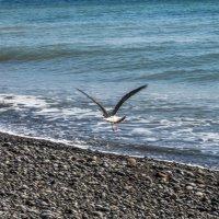 Черное море :: Лариса Батурова