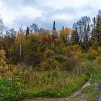 Осенние краски :: Владимир Деньгуб