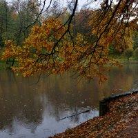 Осень цвета янтаря :: Леонид Иванчук