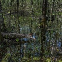 В лесу после дождя. :: Владимир Безбородов