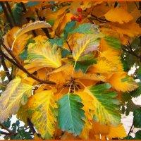 Осенние краски... :: Любовь К.