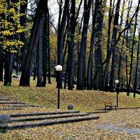 Гуляя по осеннему парку. :: Михаил Столяров