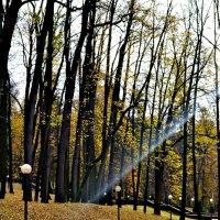 Сковозь тучи солнца луч пробился в осенний парк. :: Михаил Столяров