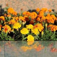 Цветы :: Viacheslav Kulikov