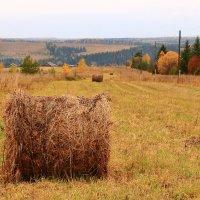 Осень в деревне :: Татьяна Шаклеина