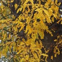 Желтая ветка :: Светлана