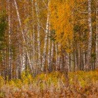 Октябрь в лесу. :: Вадим Басов
