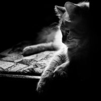 ..и снова про кота :: Александр Ещенко
