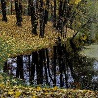 Осень(2) :: Александр